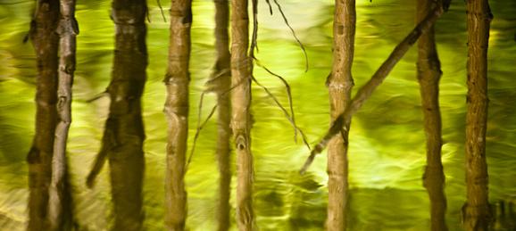 Mangroves in Thailand