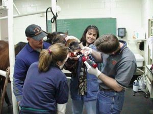 vet_students_clinical_training_2006-08